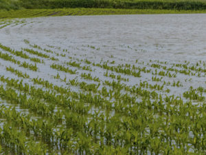 Why Crop Insurance ?