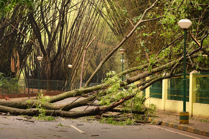 Bangalore tree uprooted